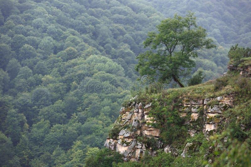 Vue supérieure des falaises rocheuses avec des arbres du Caucase du nord image libre de droits