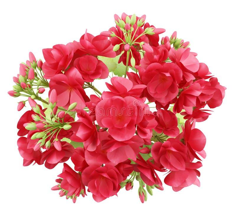 Vue supérieure des fleurs rouges de géranium d'isolement sur le blanc illustration de vecteur