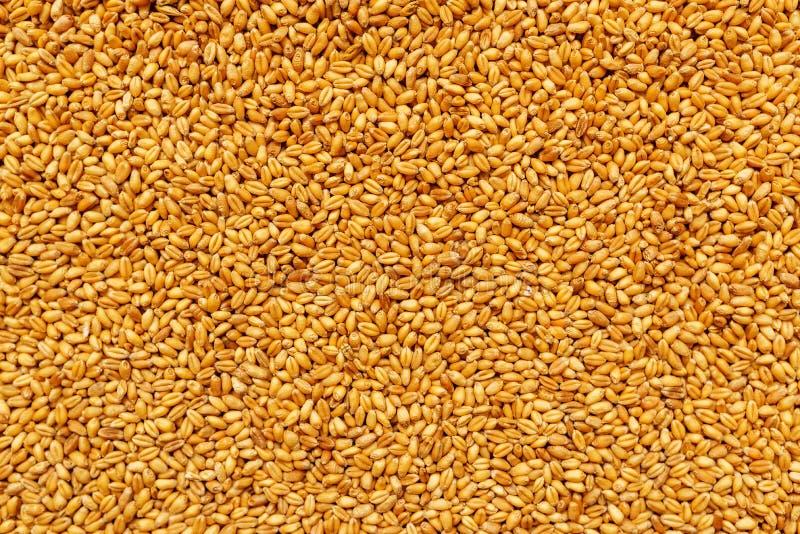 Vue supérieure des grains de céréale moissonnés de blé d'orge photographie stock libre de droits