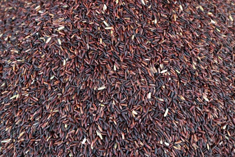 Vue supérieure des grains mauve-foncé crus de riz de Riz-baie de couleur pour le fond et la bannière photographie stock libre de droits