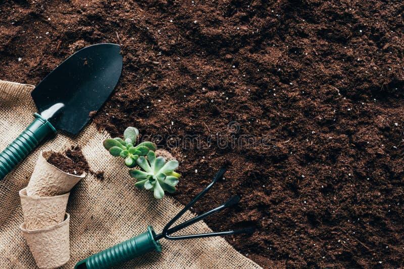 Vue supérieure des outils de jardinage, des pots de fleur et des plantes vertes sur la toile à sac photographie stock