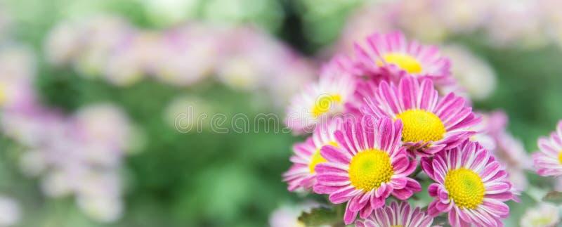 Vue supérieure du flowe de fond de fleur de Mun du fleuriste, rose et blanc photos libres de droits