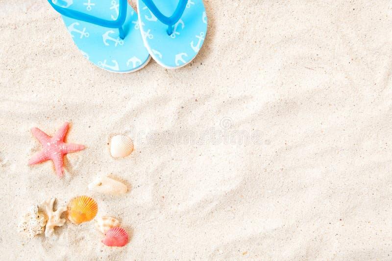 Vue supérieure du sable de plage avec des coquilles, des tarfish et la pantoufle photos stock