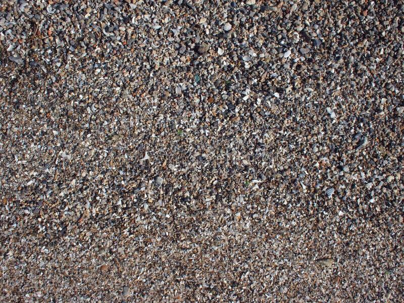 Vue supérieure du sable humide et des petites pierres avec des fragments des coquilles photographie stock