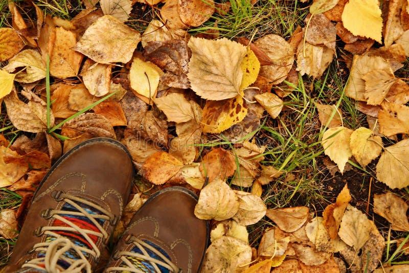 Vue supérieure sur des chaussures de brun de femme sur un fond des feuilles d'automne sèches colorées photographie stock libre de droits