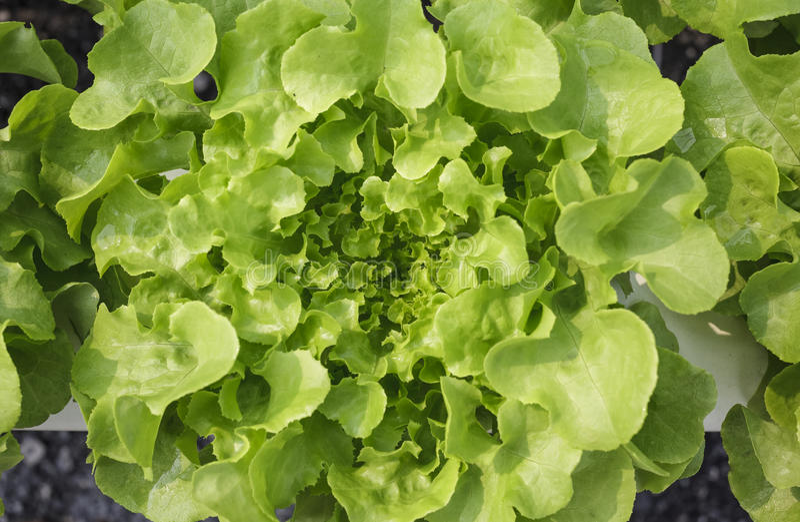 Vue supérieure végétale verte organique photos libres de droits