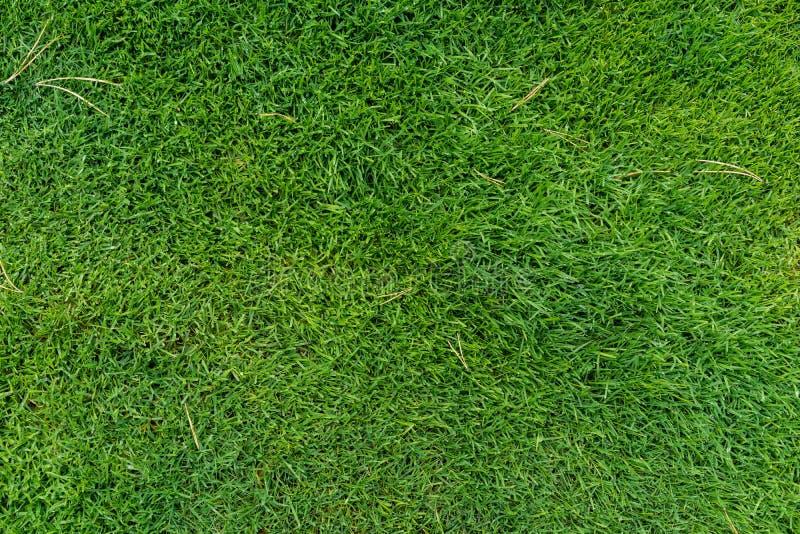Vue supérieure verte fraîche d'herbe de pré photographie stock