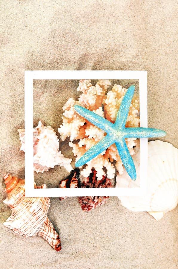 Vue sup?rieure du sable de plage avec les coquilles, le corail et les ?toiles de mer Concept de fond d'?t? photographie stock