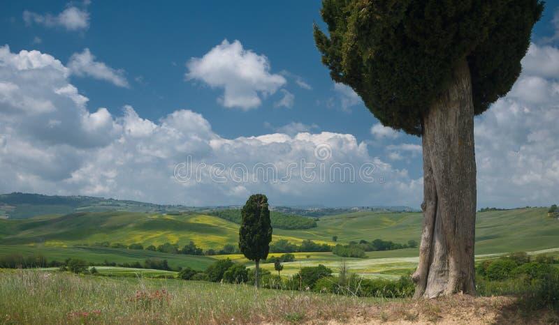 Vue sur des cyprès dans le paysage large sous un ciel bleu images stock