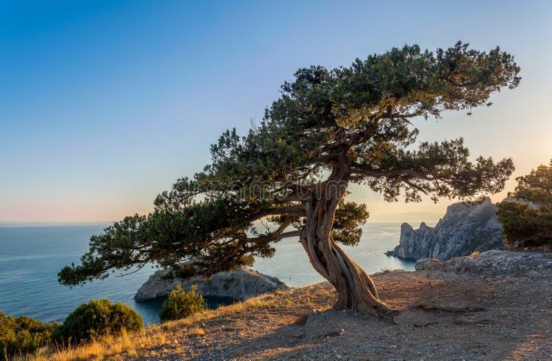Vue sur l'arbre tordu avec la longue ombre sur le chemin pierreux photo stock
