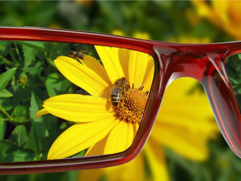 Vue sur la fleur images stock
