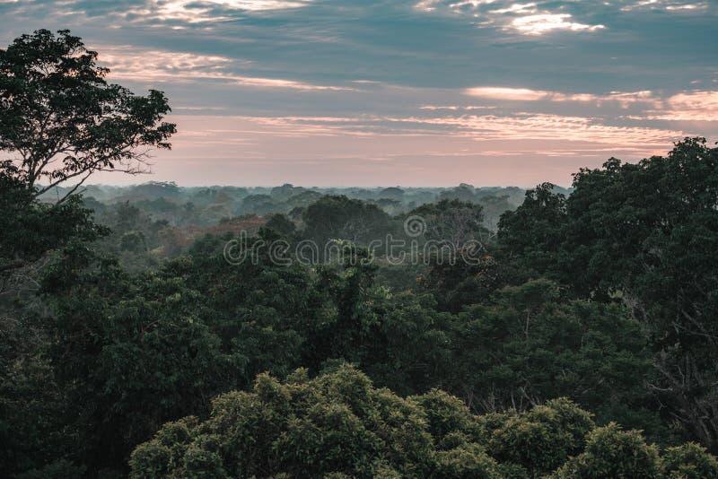 Vue sur la forêt tropicale d'Amazone pendant le coucher du soleil photo stock