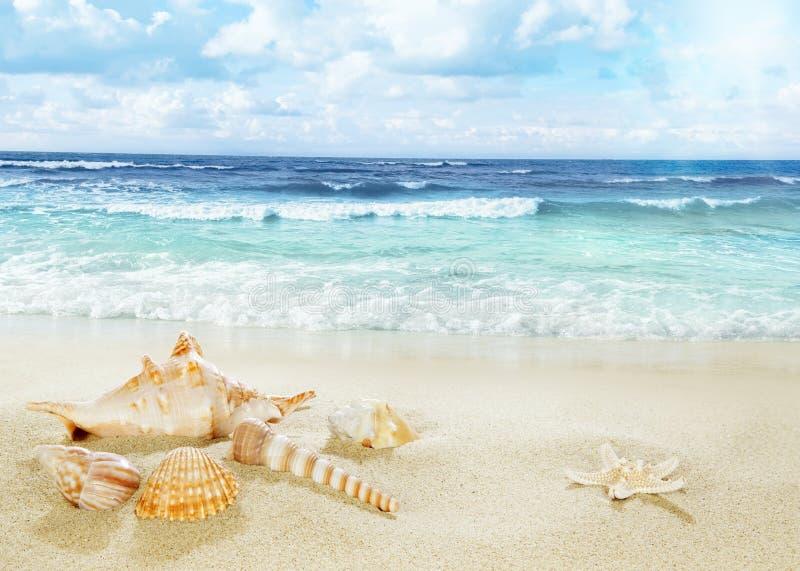 Vue sur la plage sablonneuse images libres de droits
