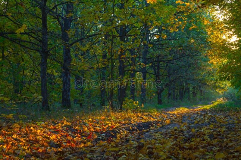 Vue sur le paysage d'automne des arbres dans le jour ensoleillé images stock