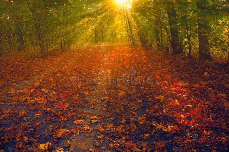 Vue sur le paysage d'automne des arbres dans le jour ensoleillé photo libre de droits