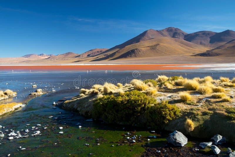 Vue sur le paysage de Laguna Colorada, Altiplano - Bolivie photographie stock libre de droits