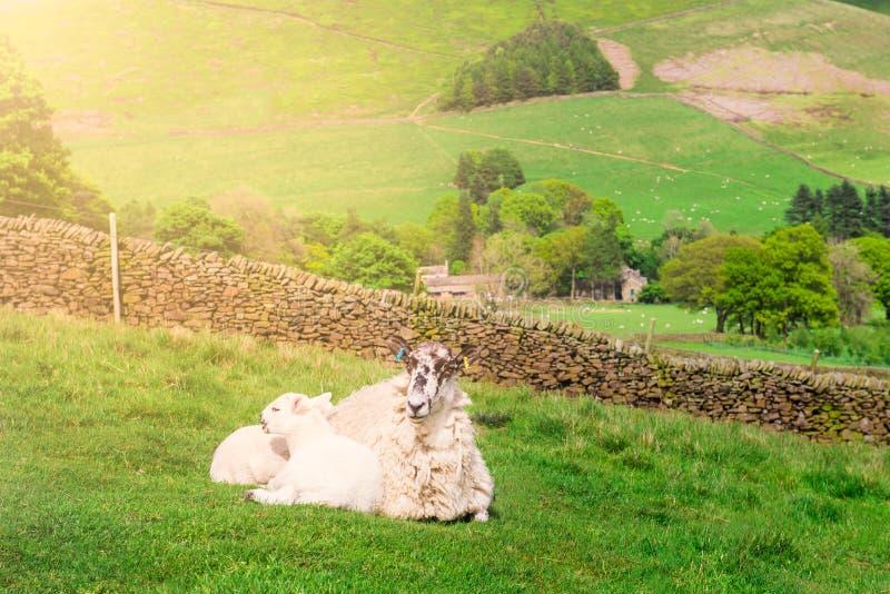 Vue sur les collines près d'Edale, parc national de secteur maximal, R-U photographie stock