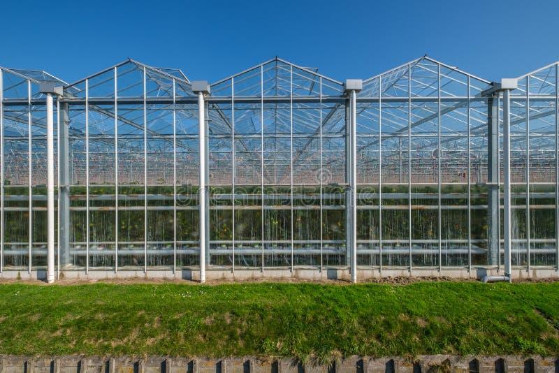Vue sur les serres chaudes en verre industrielles dans le Netehrlands photos libres de droits
