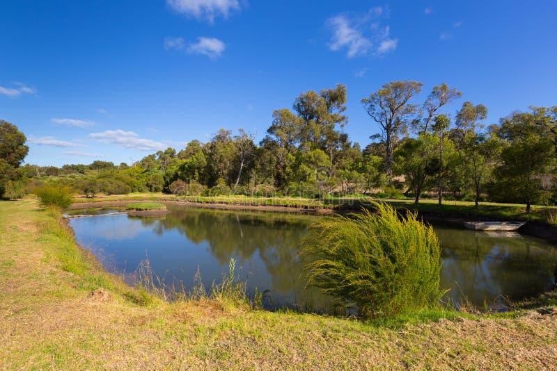Vue tranquille d'étang ovale entourée par le jardin, grand arbre, bleu image stock