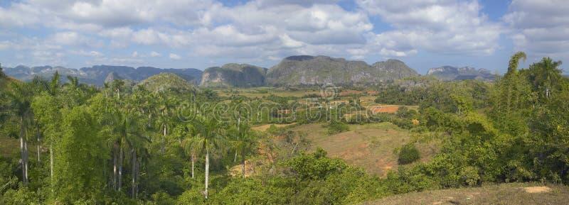 Vue tropicale des bières anglaises de ½ de ¿ de Valle de Viï, au Cuba central photos libres de droits
