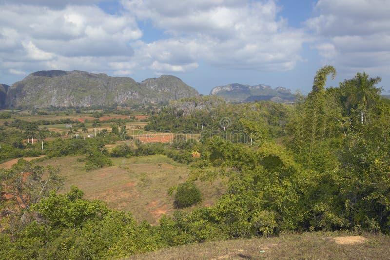 Vue tropicale des bières anglaises de ½ de ¿ de Valle de Viï, au Cuba central images libres de droits