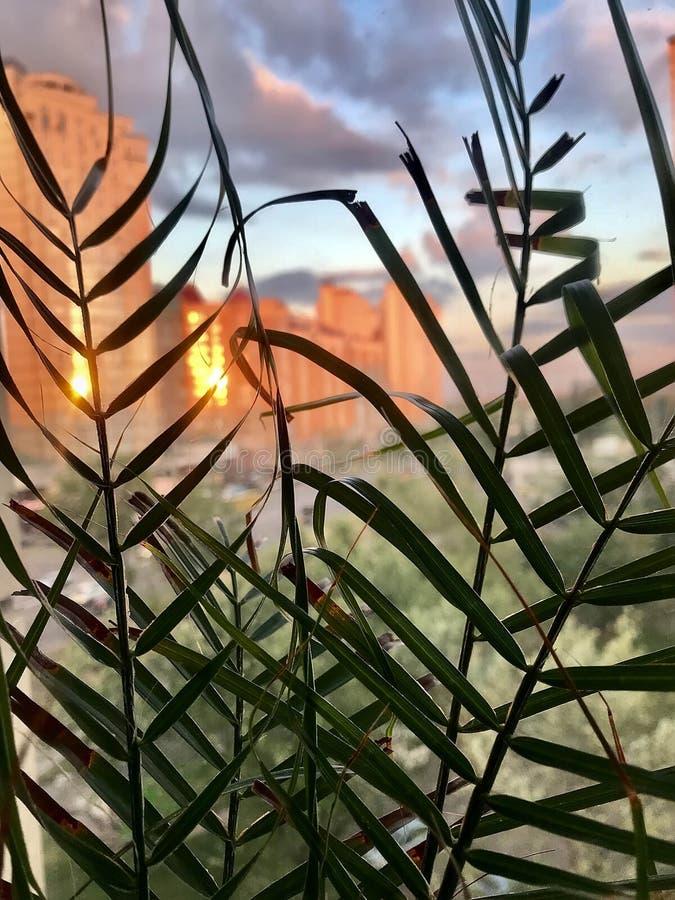 Vue urbaine de coucher du soleil de la fenêtre image libre de droits