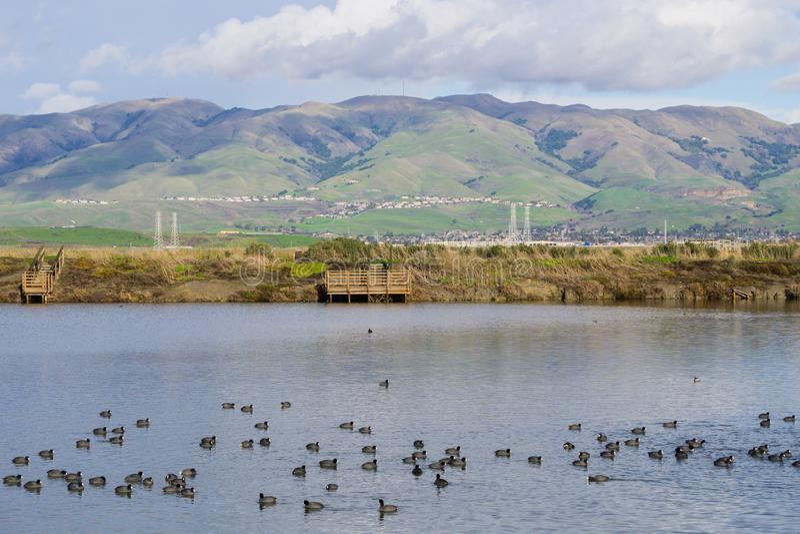 Vue vers la crête de monument ; foulques maroules nageant sur un étang de sel ; Don Edwards Wildlife Refuge, San Francisco Bay du photographie stock