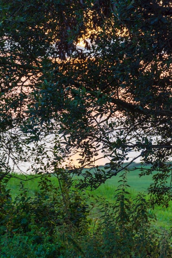 Vue verticale de pré vert par des arbres et de végétation au coucher du soleil photo libre de droits