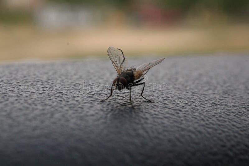 Vuele el aterrizaje al borde de mi ventana imagen de archivo
