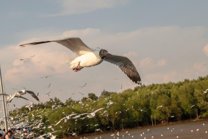 Vuelo ascendente cercano de la gaviota en el fondo del aire y del cielo La gaviota de la libertad amplía las alas en el cielo imagenes de archivo