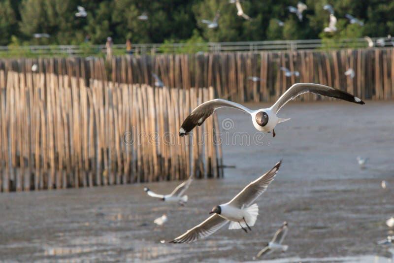 Vuelo ascendente cercano de la gaviota en el fondo del aire y del cielo La gaviota de la libertad ampl?a las alas en el cielo imagenes de archivo