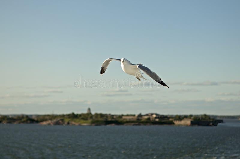 Vuelo de la gaviota sobre el mar imágenes de archivo libres de regalías