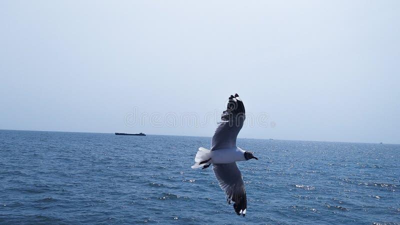 Vuelo de la gaviota sobre el océano en el cielo azul imagenes de archivo