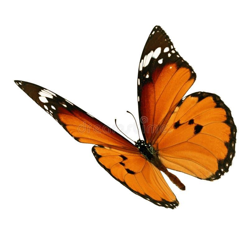 Vuelo de la mariposa de monarca fotos de archivo