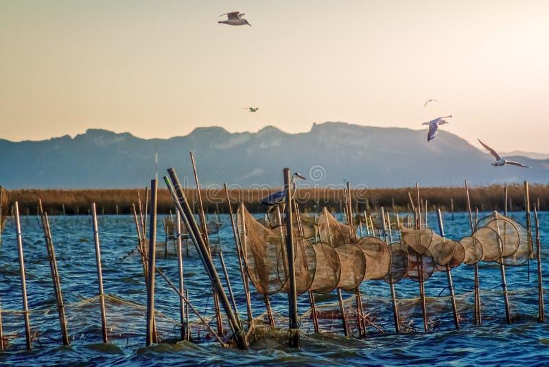 Vuelo de pájaros en la laguna de Valencia en invierno Agua con las redes del pescador imagenes de archivo