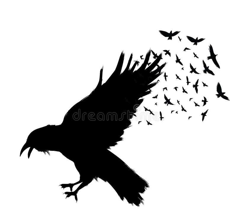 Vuelo del cuervo Cuervo negro en el fondo blanco ilustración del vector