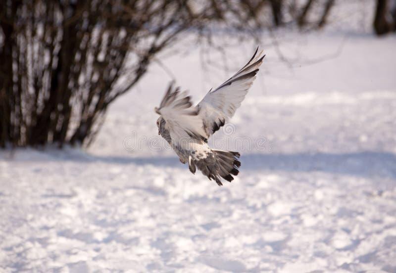 Vuelo del invierno fotografía de archivo libre de regalías
