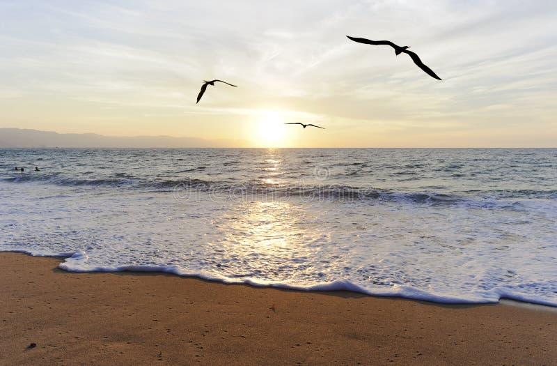 Vuelo del océano de los pájaros fotos de archivo libres de regalías