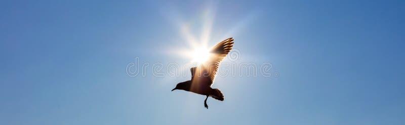 Vuelo del pájaro delante de The Sun en un cielo azul foto de archivo libre de regalías
