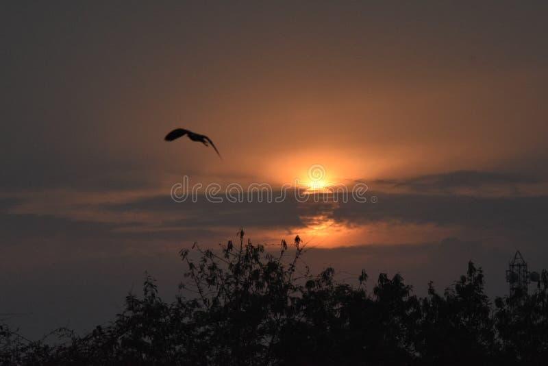 Vuelo del pájaro en el cielo fotos de archivo