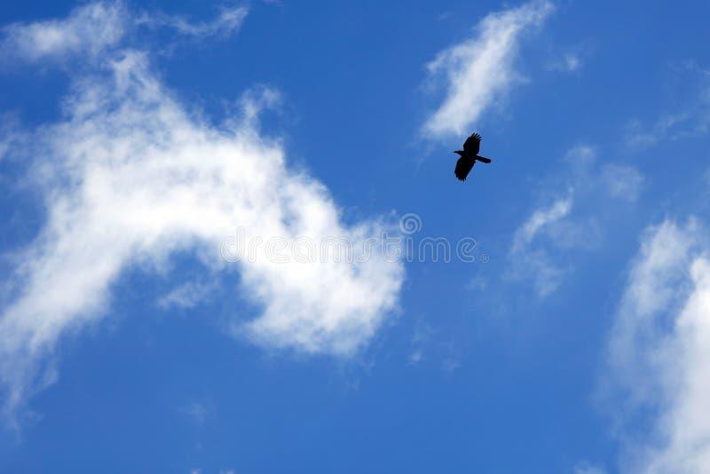 Vuelo del pájaro en el cielo azul imagen de archivo