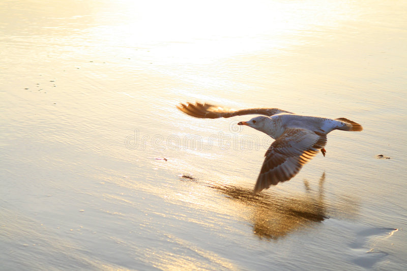 Vuelo del pájaro en la playa fotografía de archivo
