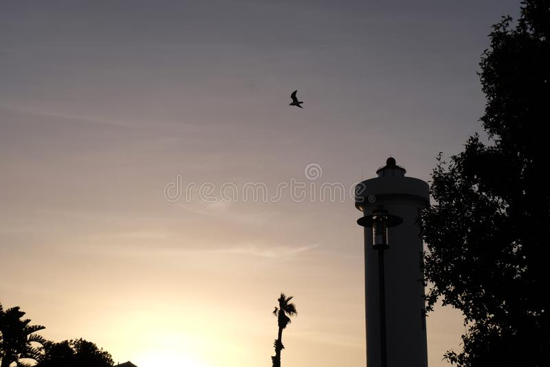 Vuelo del pájaro en la puesta del sol foto de archivo libre de regalías