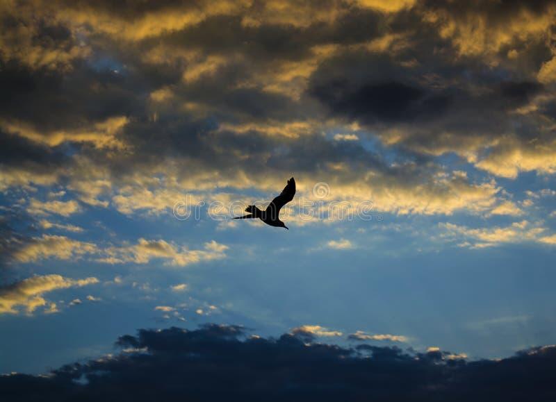Vuelo del pájaro en la puesta del sol con las nubes coloridas imagenes de archivo