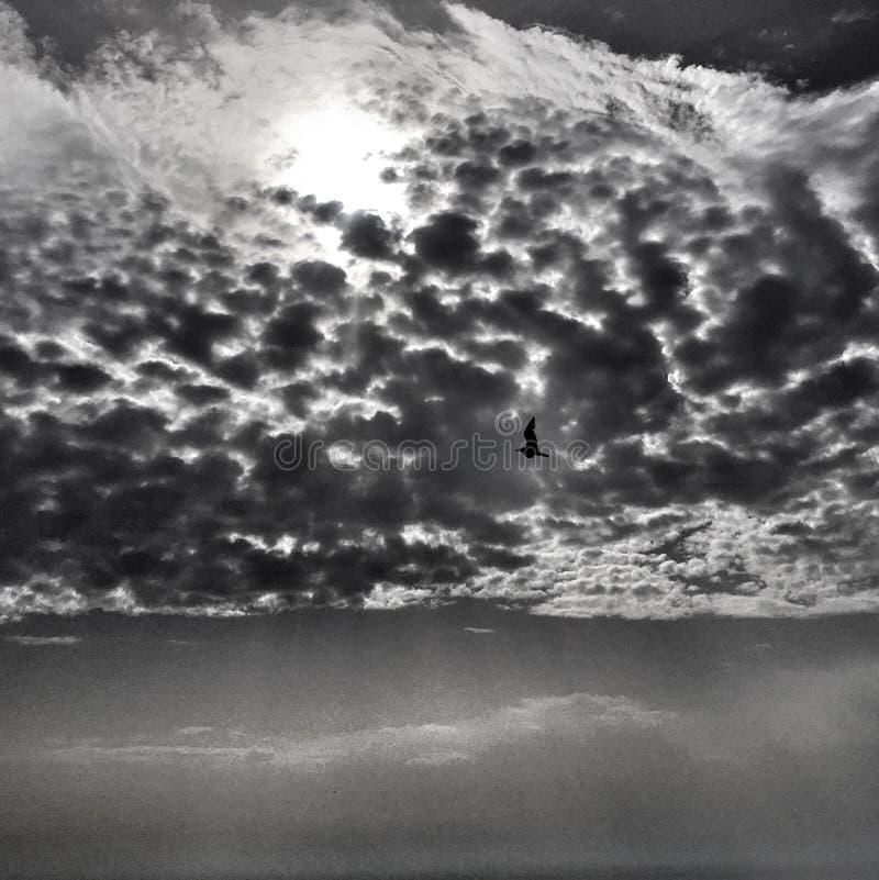 Vuelo del pájaro en luz divina del sol sobre el mar fotos de archivo