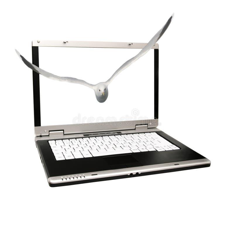 Vuelo del pájaro fuera de una computadora portátil fotos de archivo