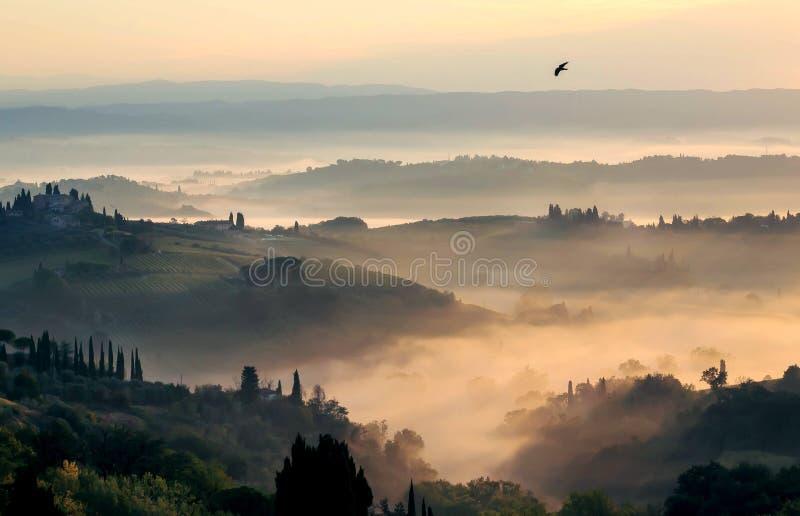 Vuelo del pájaro del trago sobre paisaje montañoso en la salida del sol brumosa Pueblos de Toscana con los árboles en el tiempo d imagenes de archivo