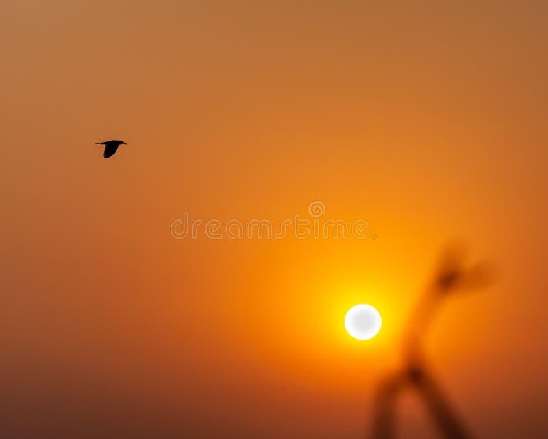 Vuelo del pájaro a través del cielo durante salida del sol foto de archivo