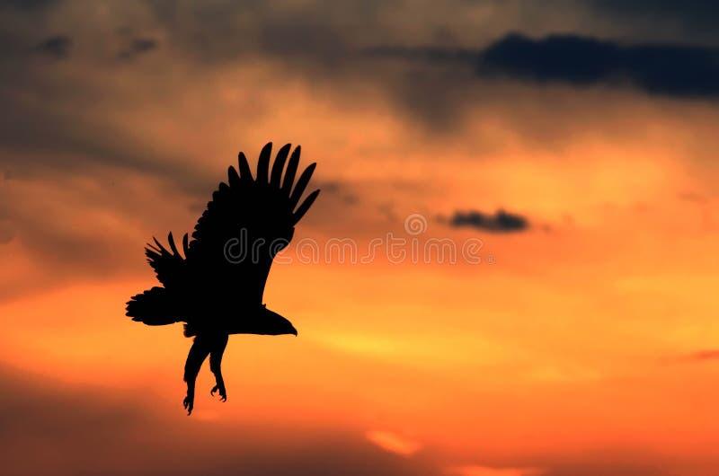 Vuelo Eagle fotos de archivo