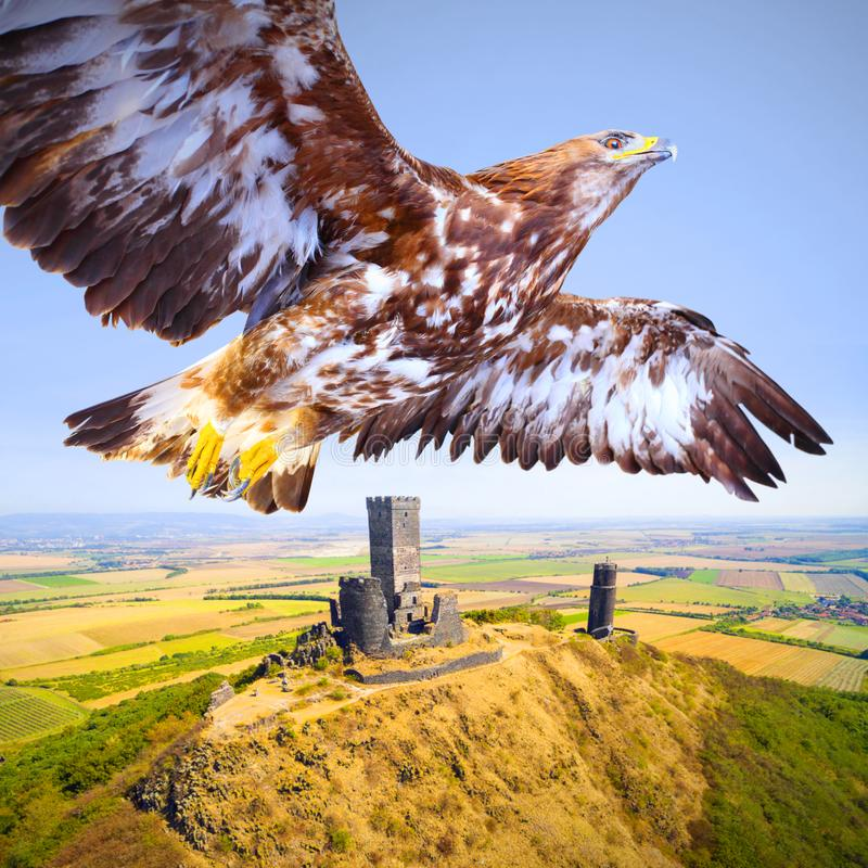 Vuelo Eagle sobre castillo medieval fotografía de archivo